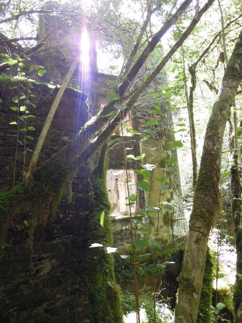 Ruine, Bild zum Text Gothic und Southern Gothic
