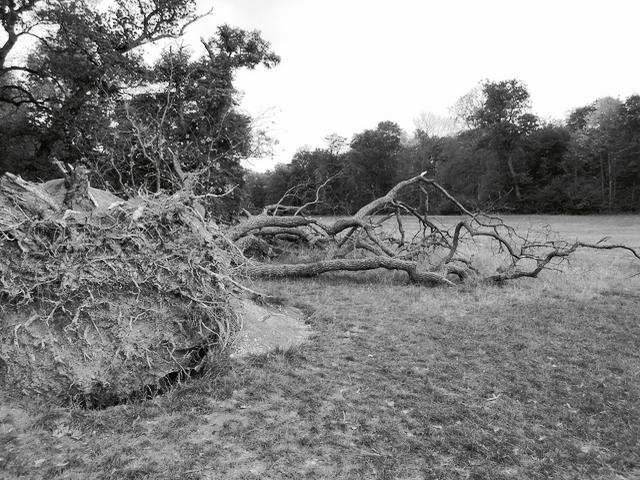 Entwurzelter Baum, bald 1 zur Besprechung von The Stopped Heart von Julie Myerson