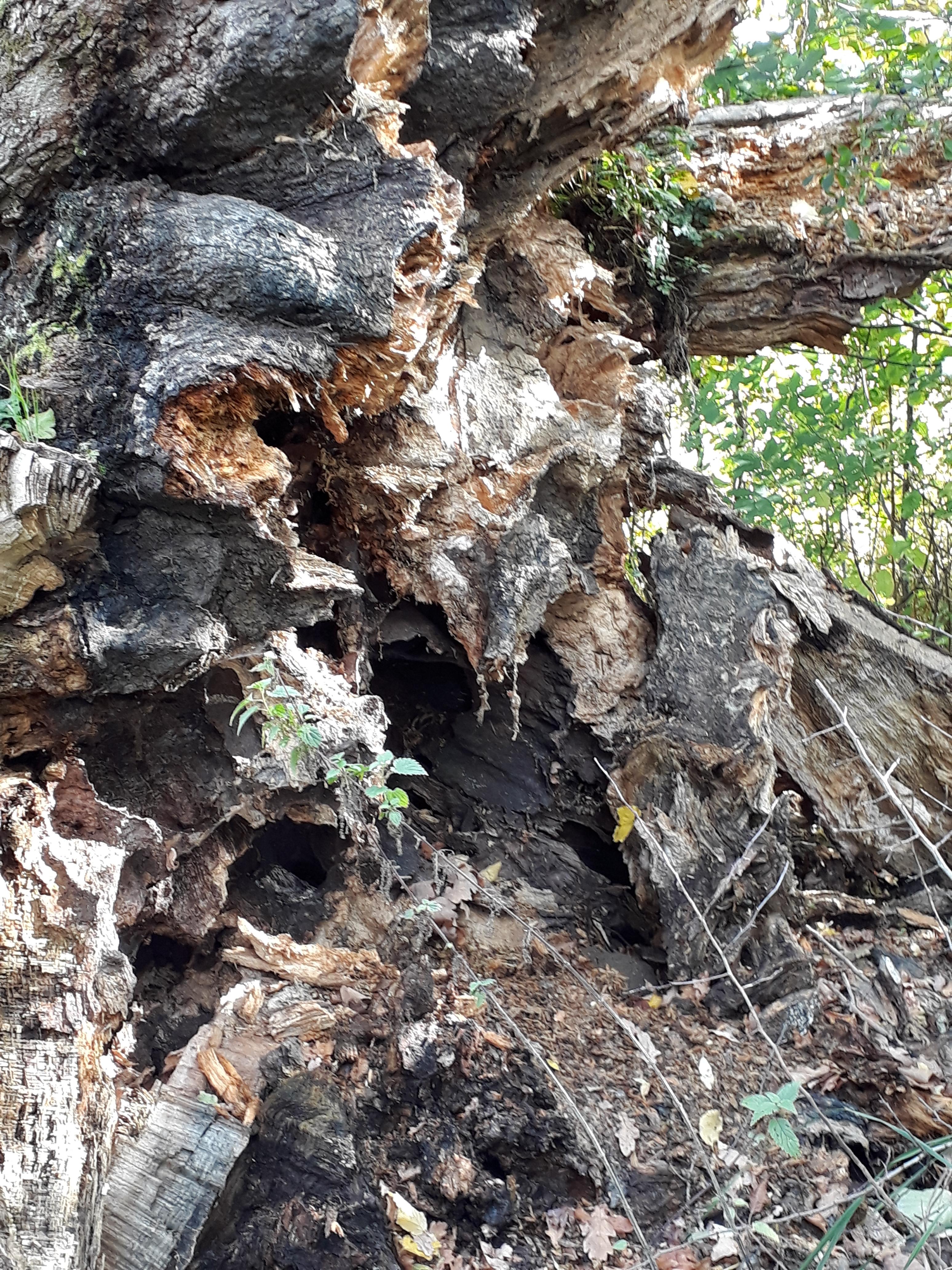Baum Seeufer mit Hütte, Bild 1 zur Krimiscout-Besprechung von Emily Fridlunds Roman »History of Wolves«