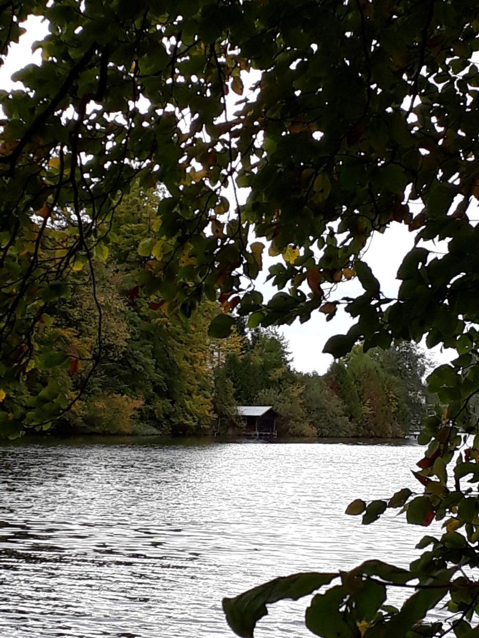 Seeufer mit Hütte, Beitragsbild zur Krimiscout-Besprechung von Emily Fridlunds Roman »History of Wolves«