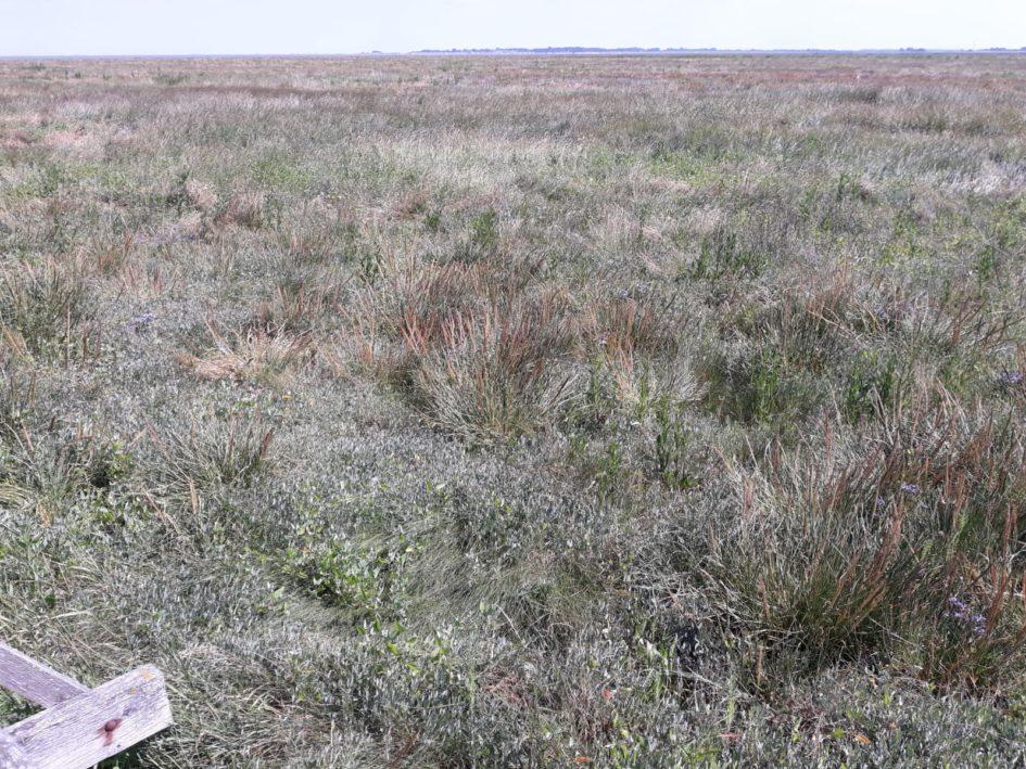 Nordsee, Salzmarschen, weite Nordseelandschaft, Beitragsbild Besprechung Salt Lane, William Shaw